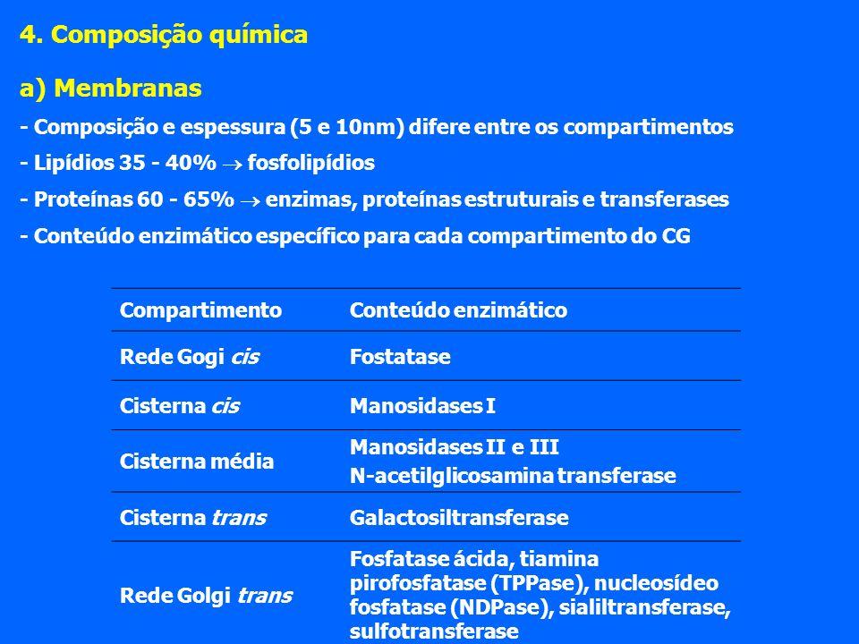 4. Composição química a) Membranas - Composição e espessura (5 e 10nm) difere entre os compartimentos - Lipídios 35 - 40% fosfolipídios - Proteínas 60