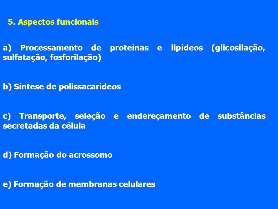 5. Aspectos funcionais a) Processamento de proteínas e lipídeos (glicosilação, sulfatação, fosforilação) b) Síntese de polissacarídeos c) Transporte,
