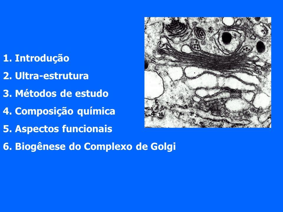 Exemplo de secreção regulada: insulina Pró-hormônio condensação e acidificação clivagem da pró-insulina em insulina (hormônio ativo)