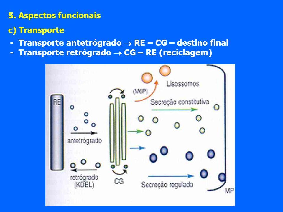 - Transporte antetrógrado RE – CG – destino final - Transporte retrógrado CG – RE (reciclagem) 5.