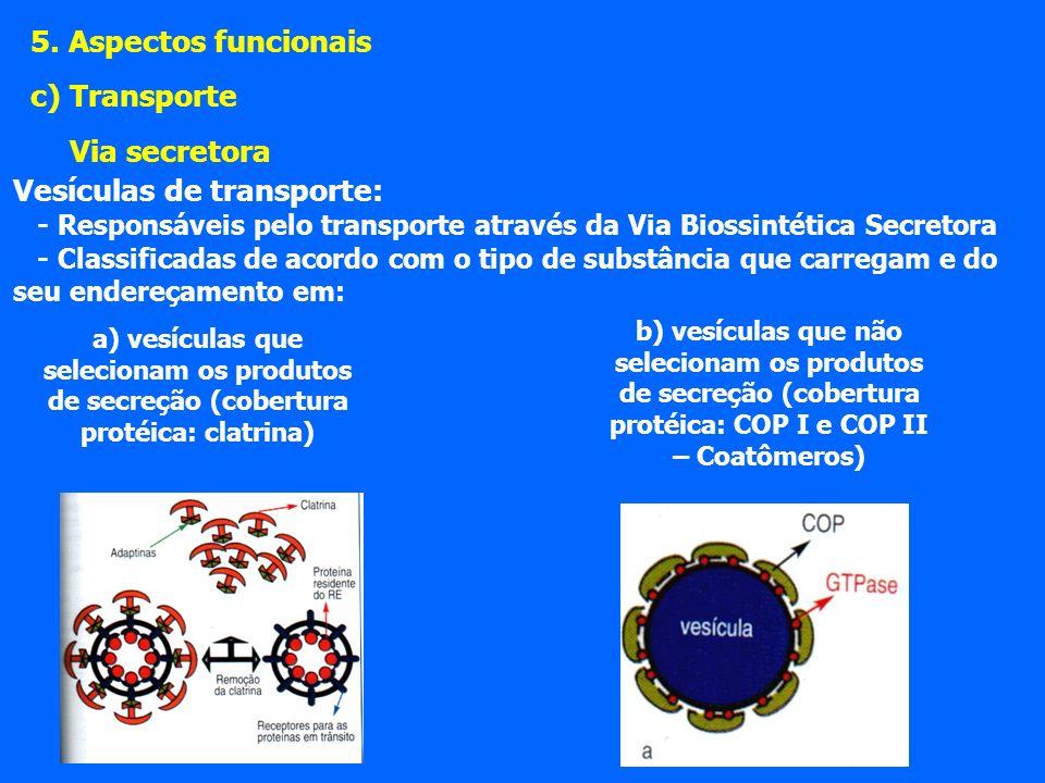 Vesículas de transporte: - Responsáveis pelo transporte através da Via Biossintética Secretora - Classificadas de acordo com o tipo de substância que carregam e do seu endereçamento em: 5.