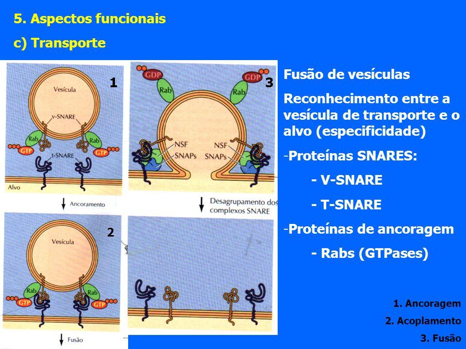 Fusão de vesículas Reconhecimento entre a vesícula de transporte e o alvo (especificidade) -Proteínas SNARES: - V-SNARE - T-SNARE -Proteínas de ancoragem - Rabs (GTPases) 1.