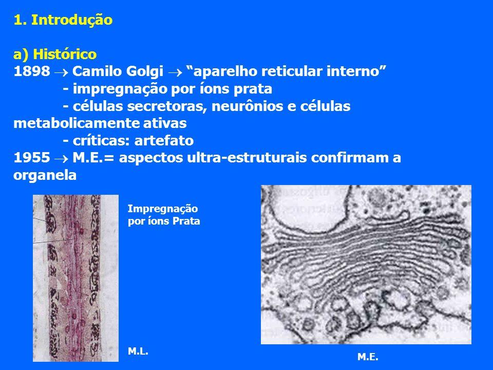 1. Introdução a) Histórico 1898 Camilo Golgi aparelho reticular interno - impregnação por íons prata - células secretoras, neurônios e células metabol