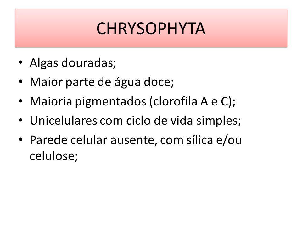 CHRYSOPHYTA Algas douradas; Maior parte de água doce; Maioria pigmentados (clorofila A e C); Unicelulares com ciclo de vida simples; Parede celular au