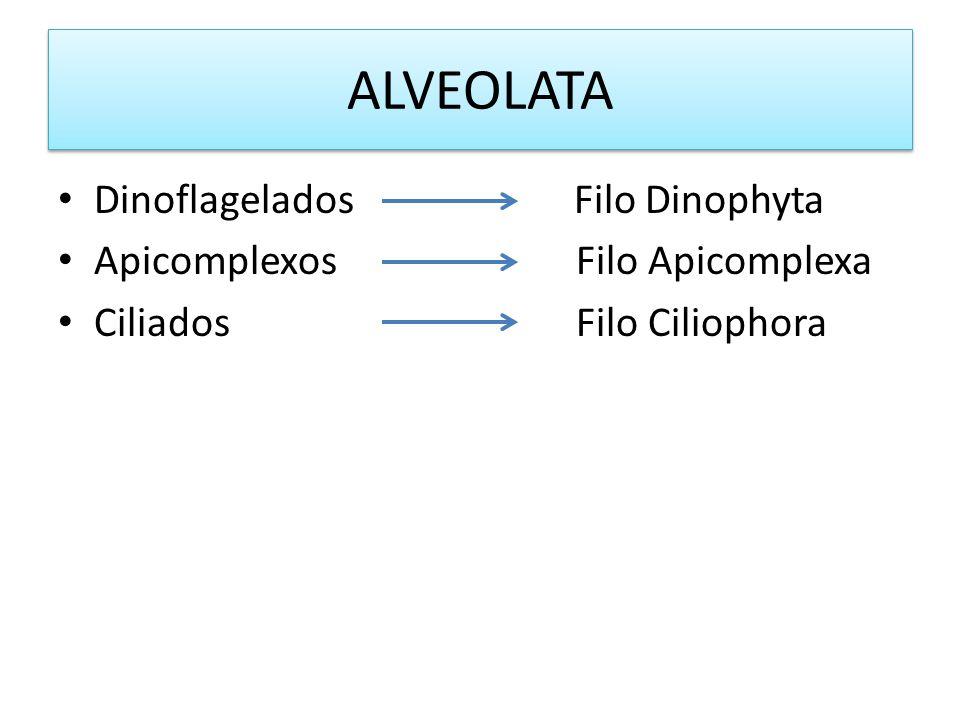 ALVEOLATA Dinoflagelados Filo Dinophyta Apicomplexos Filo Apicomplexa Ciliados Filo Ciliophora