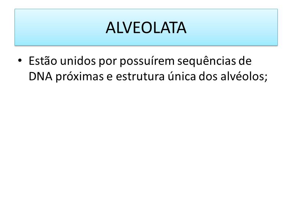 ALVEOLATA Estão unidos por possuírem sequências de DNA próximas e estrutura única dos alvéolos;