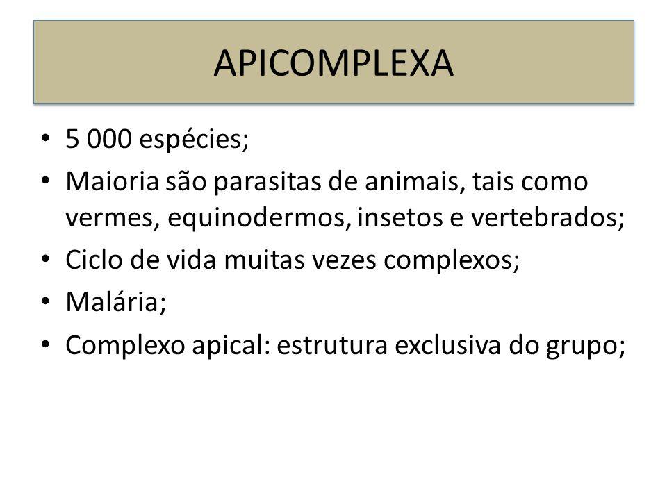 APICOMPLEXA 5 000 espécies; Maioria são parasitas de animais, tais como vermes, equinodermos, insetos e vertebrados; Ciclo de vida muitas vezes comple