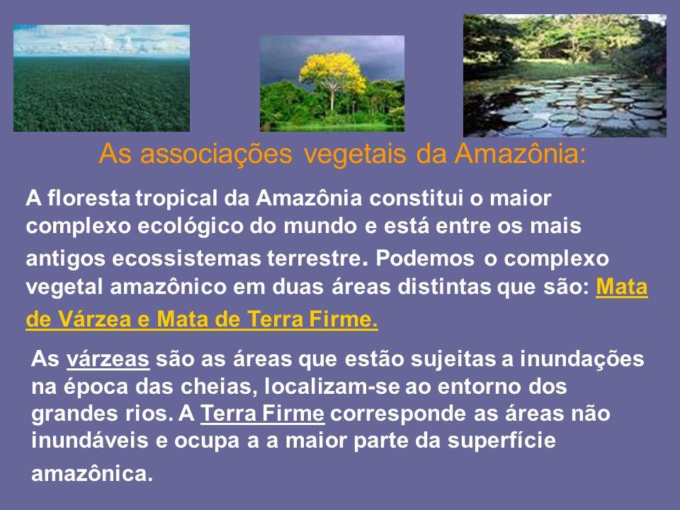 As associações vegetais da Amazônia: A floresta tropical da Amazônia constitui o maior complexo ecológico do mundo e está entre os mais antigos ecossi