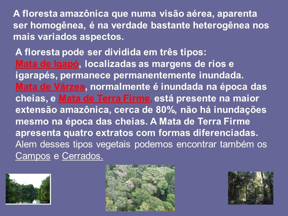A floresta amazônica que numa visão aérea, aparenta ser homogênea, é na verdade bastante heterogênea nos mais variados aspectos. A floresta pode ser d