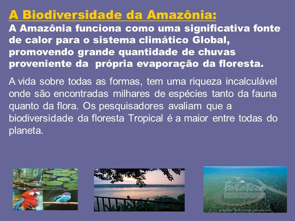 A Biodiversidade da Amazônia: A Amazônia funciona como uma significativa fonte de calor para o sistema climático Global, promovendo grande quantidade