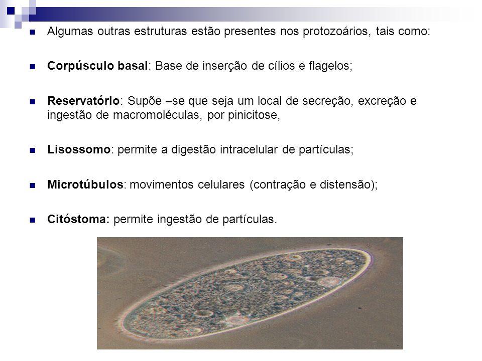 Algumas outras estruturas estão presentes nos protozoários, tais como: Corpúsculo basal: Base de inserção de cílios e flagelos; Reservatório: Supõe –s