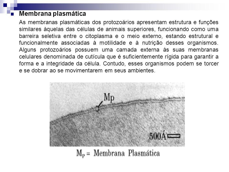 Membrana plasmática As membranas plasmáticas dos protozoários apresentam estrutura e funções similares àquelas das células de animais superiores, func