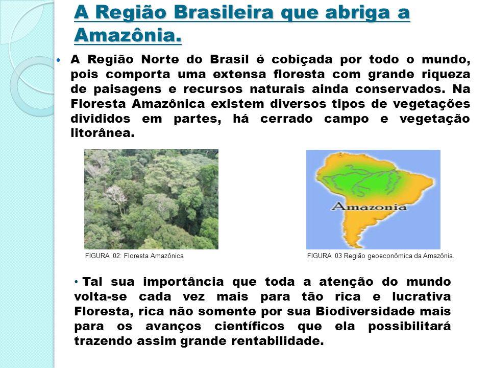 A Região Brasileira que abriga a Amazônia. A Região Norte do Brasil é cobiçada por todo o mundo, pois comporta uma extensa floresta com grande riqueza