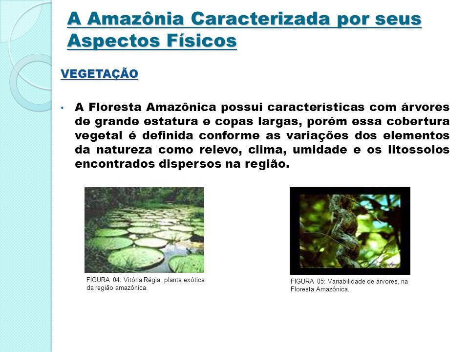 A Amazônia Caracterizada por seus Aspectos Físicos VEGETAÇÃO A Floresta Amazônica possui características com árvores de grande estatura e copas largas