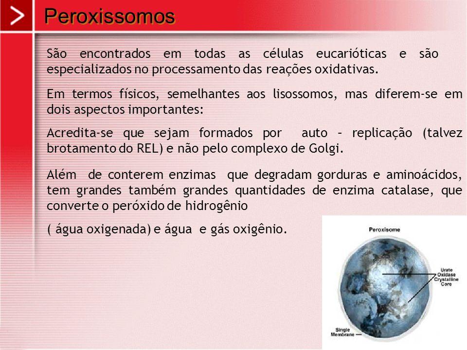 Peroxissomos São encontrados em todas as células eucarióticas e são especializados no processamento das reações oxidativas. Em termos físicos, semelha