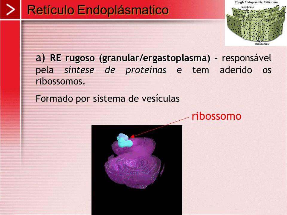 Retículo Endoplásmatico RE rugoso (granular/ergastoplasma) síntese de proteínas a) RE rugoso (granular/ergastoplasma) - responsável pela síntese de pr