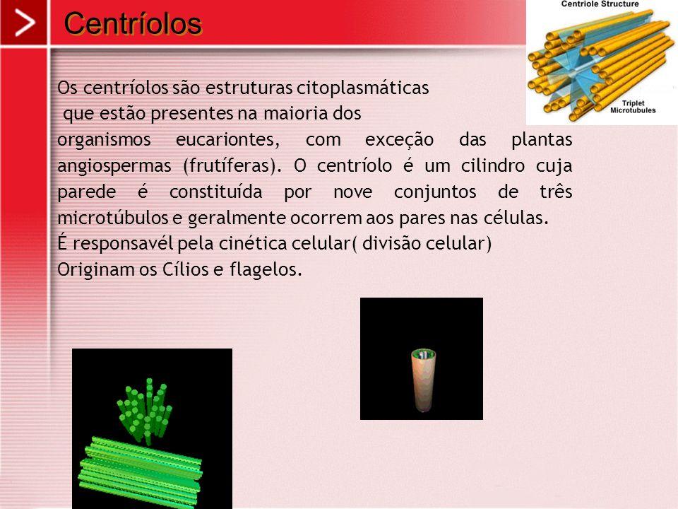 Centríolos Os centríolos são estruturas citoplasmáticas que estão presentes na maioria dos organismos eucariontes, com exceção das plantas angiosperma