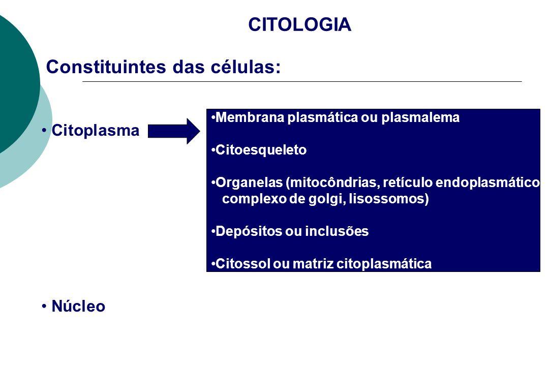 Metáfase - cromatina atinge estado de condensação máxima (1000X a da intérfase), cromossomos se tornam realmente visíveis ao MO.