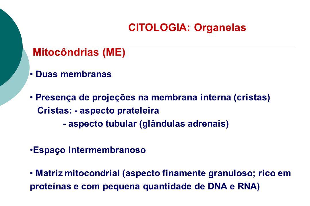 Nucléolo Heterocromatina Eucromatina