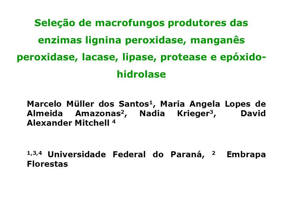Seleção de macrofungos produtores das enzimas lignina peroxidase, manganês peroxidase, lacase, lipase, protease e epóxido- hidrolase Marcelo Müller do