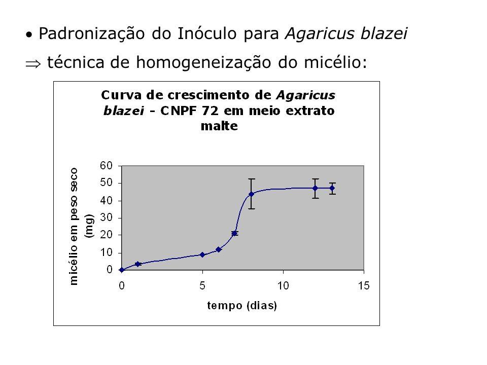 Padronização do Inóculo para Agaricus blazei técnica de homogeneização do micélio: