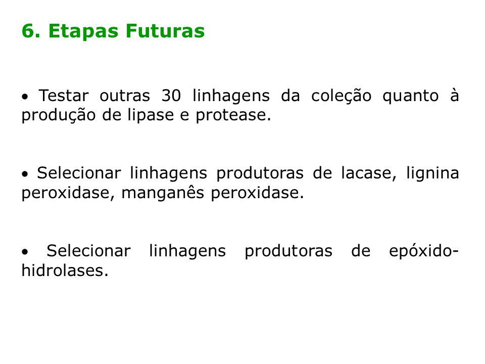 6. Etapas Futuras Testar outras 30 linhagens da coleção quanto à produção de lipase e protease. Selecionar linhagens produtoras de lacase, lignina per