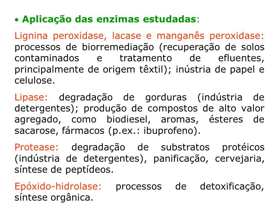 Aplicação das enzimas estudadas: Lignina peroxidase, lacase e manganês peroxidase: processos de biorremediação (recuperação de solos contaminados e tr