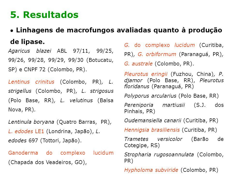 5. Resultados Linhagens de macrofungos avaliadas quanto à produção de lipase. Agaricus blazei ABL 97/11, 99/25, 99/26, 99/28, 99/29, 99/30 (Botucatu,
