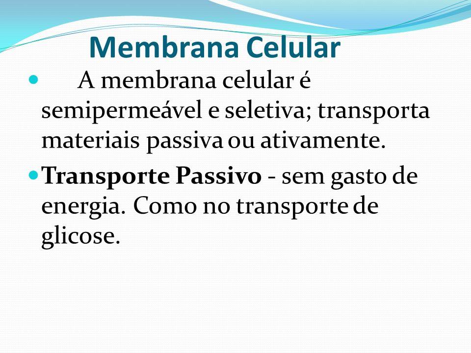 Membrana Celular A membrana celular é semipermeável e seletiva; transporta materiais passiva ou ativamente. Transporte Passivo - sem gasto de energia.