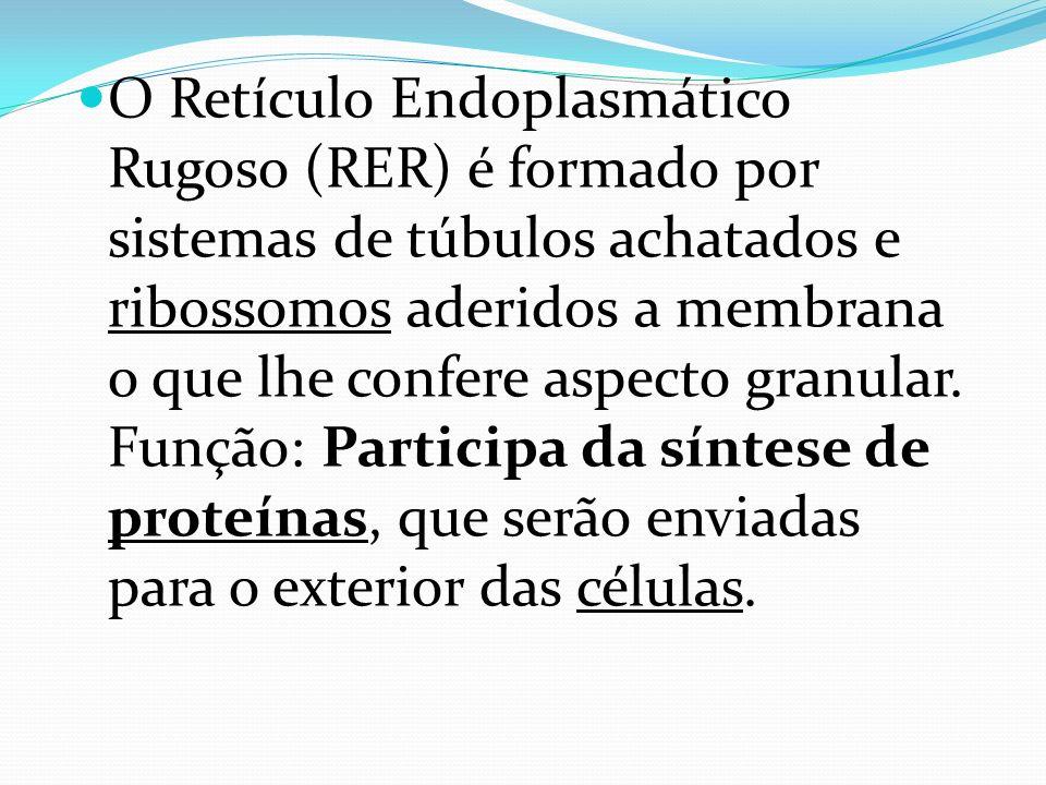O Retículo Endoplasmático Rugoso (RER) é formado por sistemas de túbulos achatados e ribossomos aderidos a membrana o que lhe confere aspecto granular
