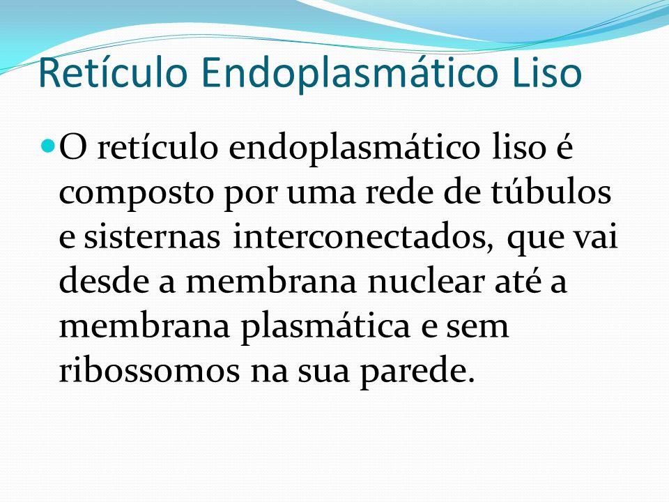 Retículo Endoplasmático Liso O retículo endoplasmático liso é composto por uma rede de túbulos e sisternas interconectados, que vai desde a membrana n