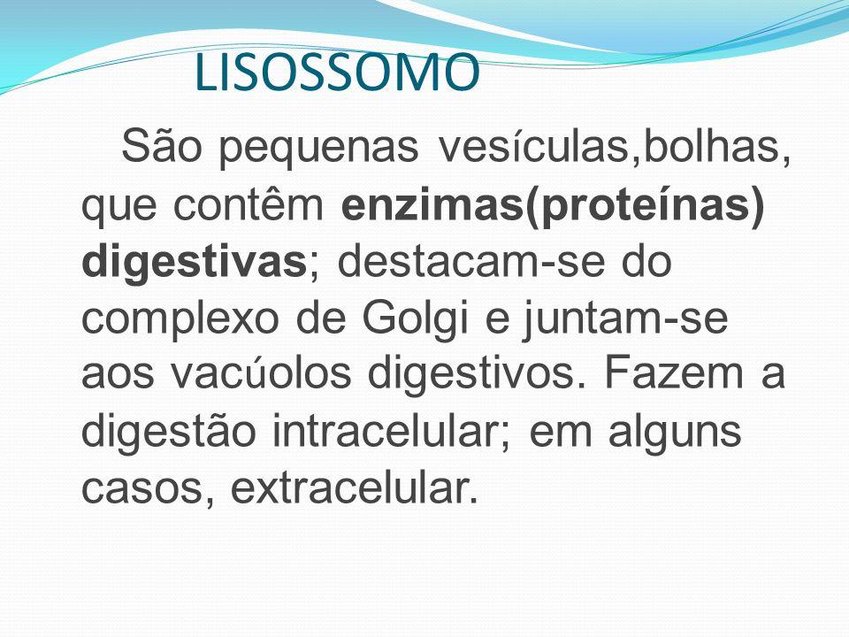 São pequenas ves í culas,bolhas, que contêm enzimas(proteínas) digestivas; destacam-se do complexo de Golgi e juntam-se aos vac ú olos digestivos. Faz