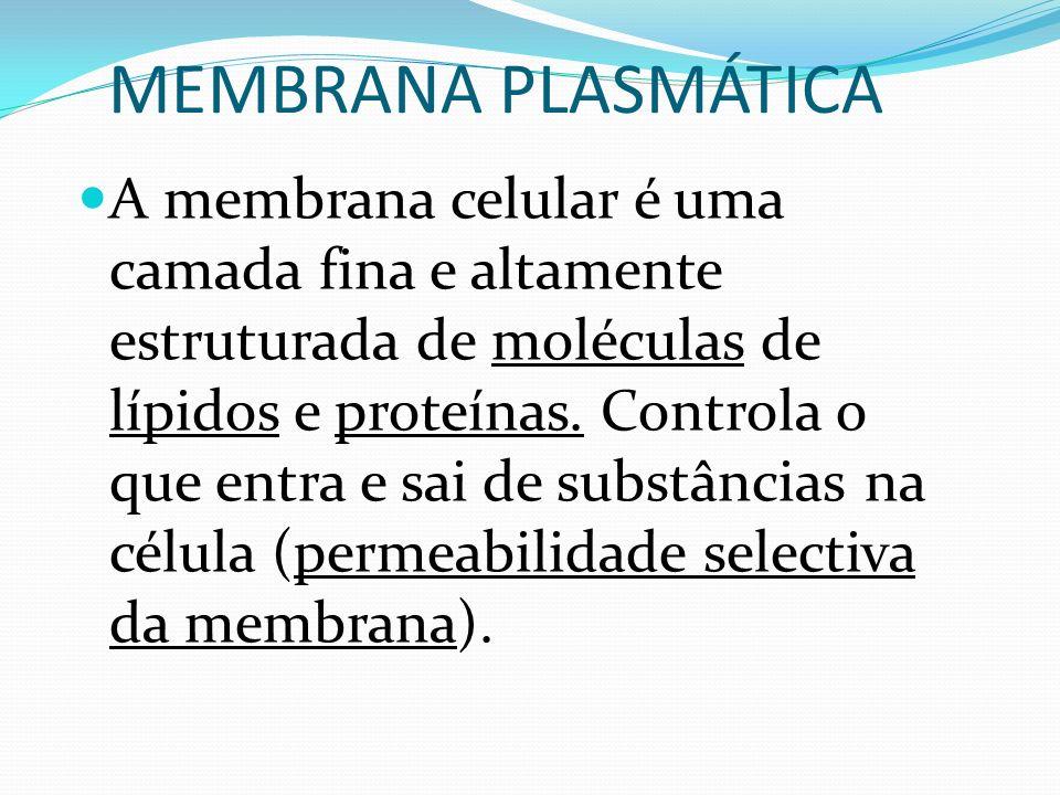 A membrana celular é uma camada fina e altamente estruturada de moléculas de lípidos e proteínas. Controla o que entra e sai de substâncias na célula