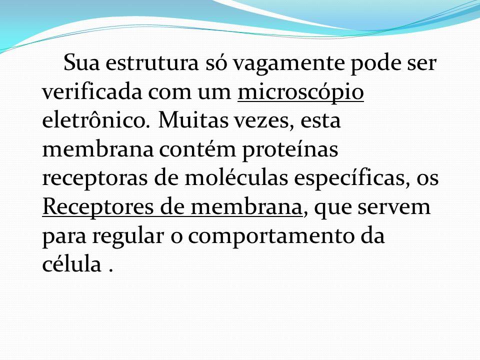 Membrana Celular A membrana celular é semipermeável e seletiva; transporta materiais passiva ou ativamente.