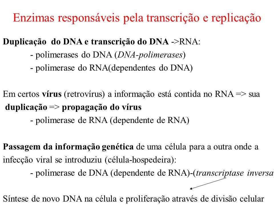 Enzimas responsáveis pela transcrição e replicação Duplicação do DNA e transcrição do DNA ->RNA: - polimerases do DNA (DNA-polimerases) - polimerase do RNA(dependentes do DNA) Em certos vírus (retrovírus) a informação está contida no RNA => sua duplicação => propagação do vírus - polimerase de RNA (dependente de RNA) Passagem da informação genética de uma célula para a outra onde a infecção viral se introduziu (célula-hospedeira): - polimerase de DNA (dependente de RNA)-(transcriptase inversa) Síntese de novo DNA na célula e proliferação através de divisão celular