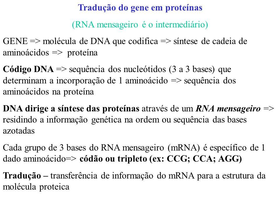 Tradução do gene em proteínas (RNA mensageiro é o intermediário) GENE => molécula de DNA que codifica => síntese de cadeia de aminoácidos => proteína Código DNA => sequência dos nucleótidos (3 a 3 bases) que determinam a incorporação de 1 aminoácido => sequência dos aminoácidos na proteína DNA dirige a síntese das proteínas através de um RNA mensageiro => residindo a informação genética na ordem ou sequência das bases azotadas Cada grupo de 3 bases do RNA mensageiro (mRNA) é específico de 1 dado aminoácido=> códão ou tripleto (ex: CCG; CCA; AGG) Tradução – transferência de informação do mRNA para a estrutura da molécula proteica