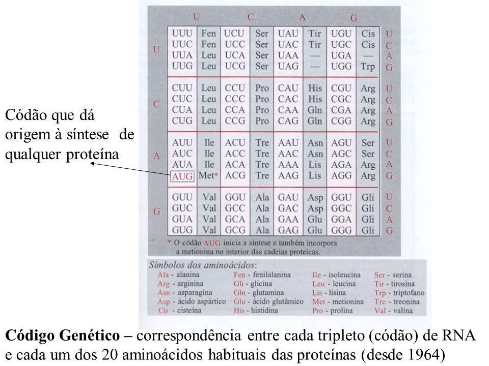 Código Genético – correspondência entre cada tripleto (códão) de RNA e cada um dos 20 aminoácidos habituais das proteínas (desde 1964) Códão que dá origem à síntese de qualquer proteína