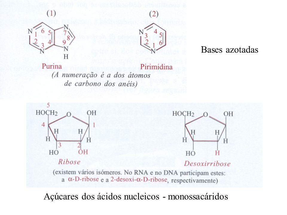 Açúcares dos ácidos nucleicos - monossacáridos Bases azotadas