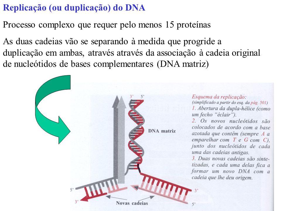 Replicação (ou duplicação) do DNA Processo complexo que requer pelo menos 15 proteínas As duas cadeias vão se separando à medida que progride a duplicação em ambas, através através da associação à cadeia original de nucleótidos de bases complementares (DNA matriz)