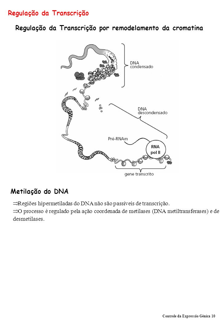 Regulação da Transcrição Regulação da Transcrição por remodelamento da cromatina Metilação do DNA Regiões hipermetiladas do DNA não são passíveis de transcrição.