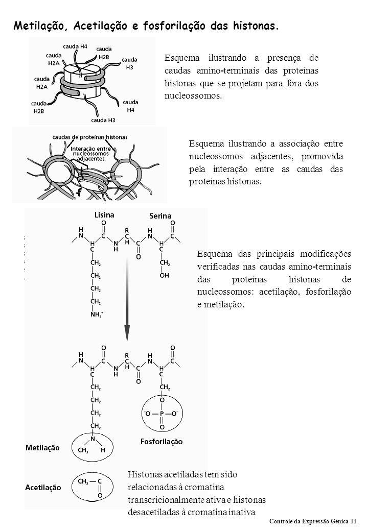 Metilação, Acetilação e fosforilação das histonas.
