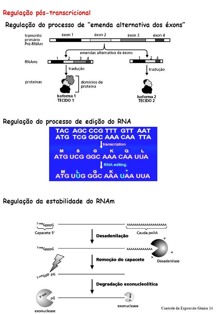 Regulação pós-transcricional Regulação do processo de emenda alternativa dos éxons Regulação do processo de edição do RNA Regulação da estabilidade do RNAm Controle da Expressão Gênica 14