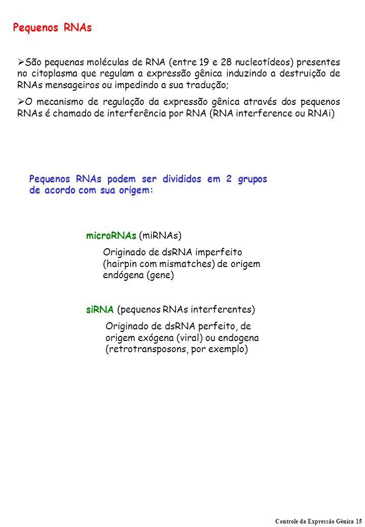 Pequenos RNAs Controle da Expressão Gênica 15 São pequenas moléculas de RNA (entre 19 e 28 nucleotídeos) presentes no citoplasma que regulam a expressão gênica induzindo a destruição de RNAs mensageiros ou impedindo a sua tradução; O mecanismo de regulação da expressão gênica através dos pequenos RNAs é chamado de interferência por RNA (RNA interference ou RNAi) Pequenos RNAs podem ser divididos em 2 grupos de acordo com sua origem: microRNAs (miRNAs) Originado de dsRNA imperfeito (hairpin com mismatches) de origem endógena (gene) siRNA (pequenos RNAs interferentes) Originado de dsRNA perfeito, de origem exógena (viral) ou endogena (retrotransposons, por exemplo)