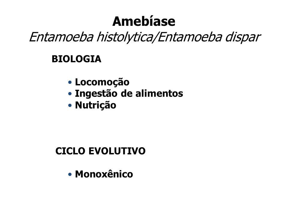 Amebíase Entamoeba histolytica/Entamoeba dispar BIOLOGIA Locomoção Ingestão de alimentos Nutrição CICLO EVOLUTIVO Monoxênico