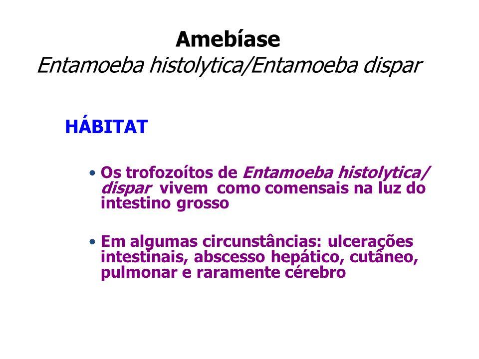 Amebíase Entamoeba histolytica/Entamoeba dispar HÁBITAT Os trofozoítos de Entamoeba histolytica/ dispar vivem como comensais na luz do intestino gross