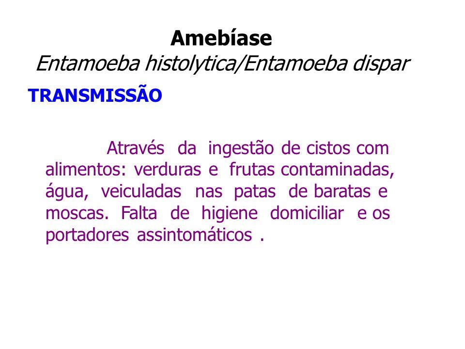 Amebíase Entamoeba histolytica/Entamoeba dispar TRANSMISSÃO Através da ingestão de cistos com alimentos: verduras e frutas contaminadas, água, veicula
