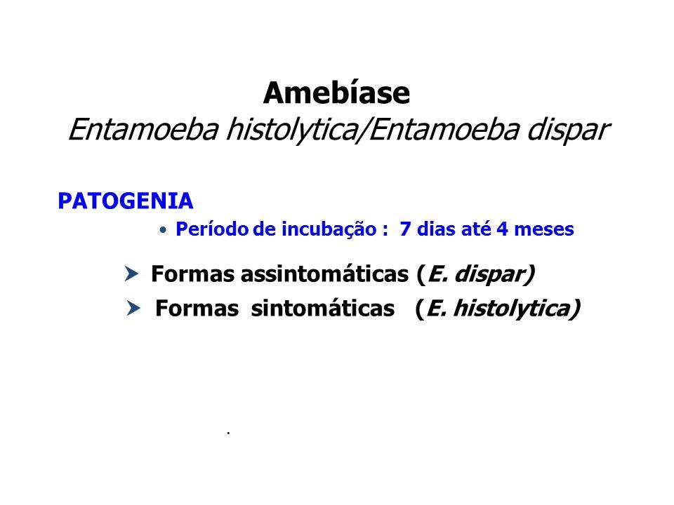 Amebíase Entamoeba histolytica/Entamoeba dispar PATOGENIA Período de incubação : 7 dias até 4 meses Formas assintomáticas (E. dispar) Formas sintomáti