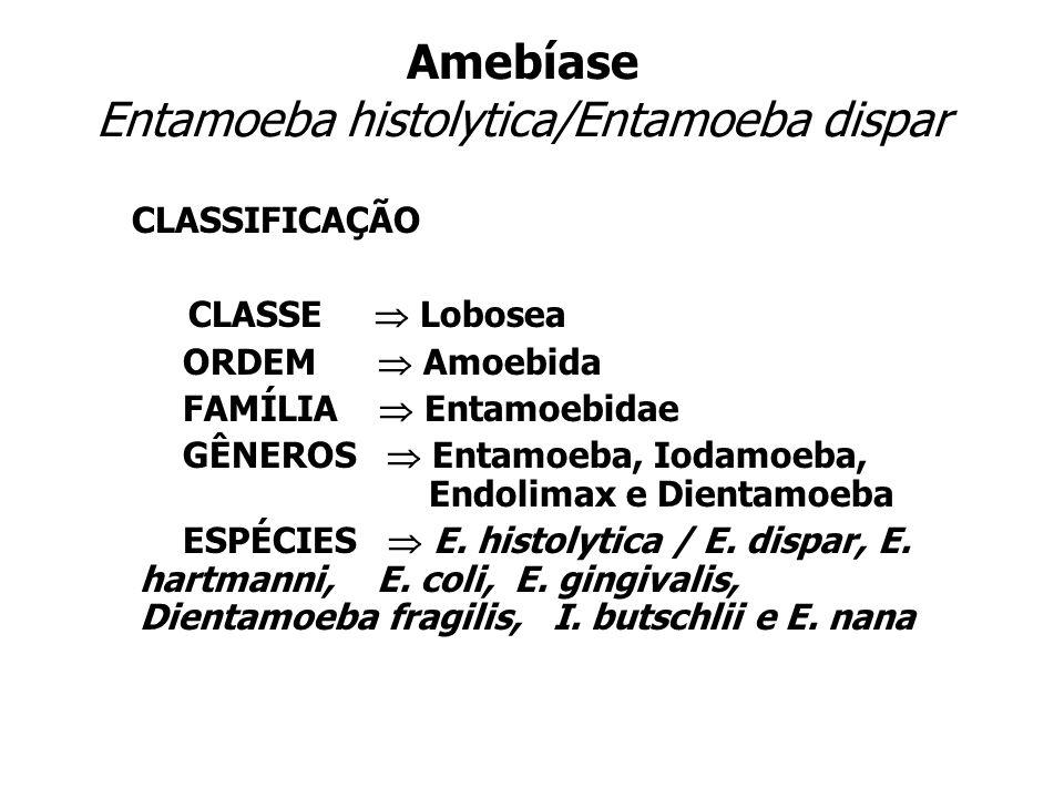 Amebíase Entamoeba histolytica/Entamoeba dispar CLASSIFICAÇÃO CLASSE Lobosea ORDEM Amoebida FAMÍLIA Entamoebidae GÊNEROS Entamoeba, Iodamoeba, Endolim