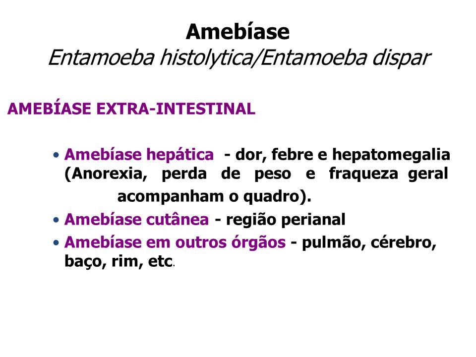 Amebíase Entamoeba histolytica/Entamoeba dispar AMEBÍASE EXTRA-INTESTINAL Amebíase hepática - dor, febre e hepatomegalia (Anorexia, perda de peso e fr