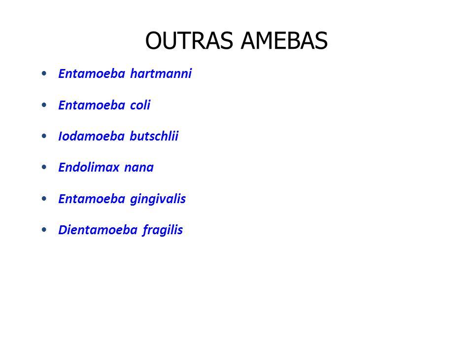 OUTRAS AMEBAS Entamoeba hartmanni Entamoeba coli Iodamoeba butschlii Endolimax nana Entamoeba gingivalis Dientamoeba fragilis